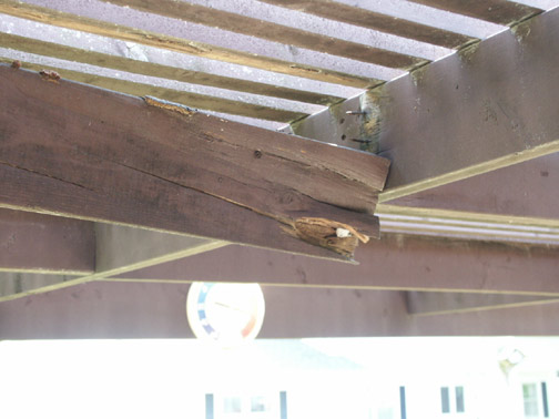 Rotted pergola joist built with untreated pine